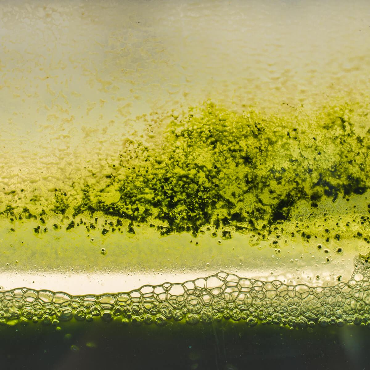 <ul> <li>استخلاص على نطاق واسع للجزيئات النشطة من أصل نباتي، ميكروبي أو طحلبي</li> <li>التركيز في حرارة منخفظة للاستخلاصات المنجزة أو لوسائل الزرع الميكروبية</li> </ul>