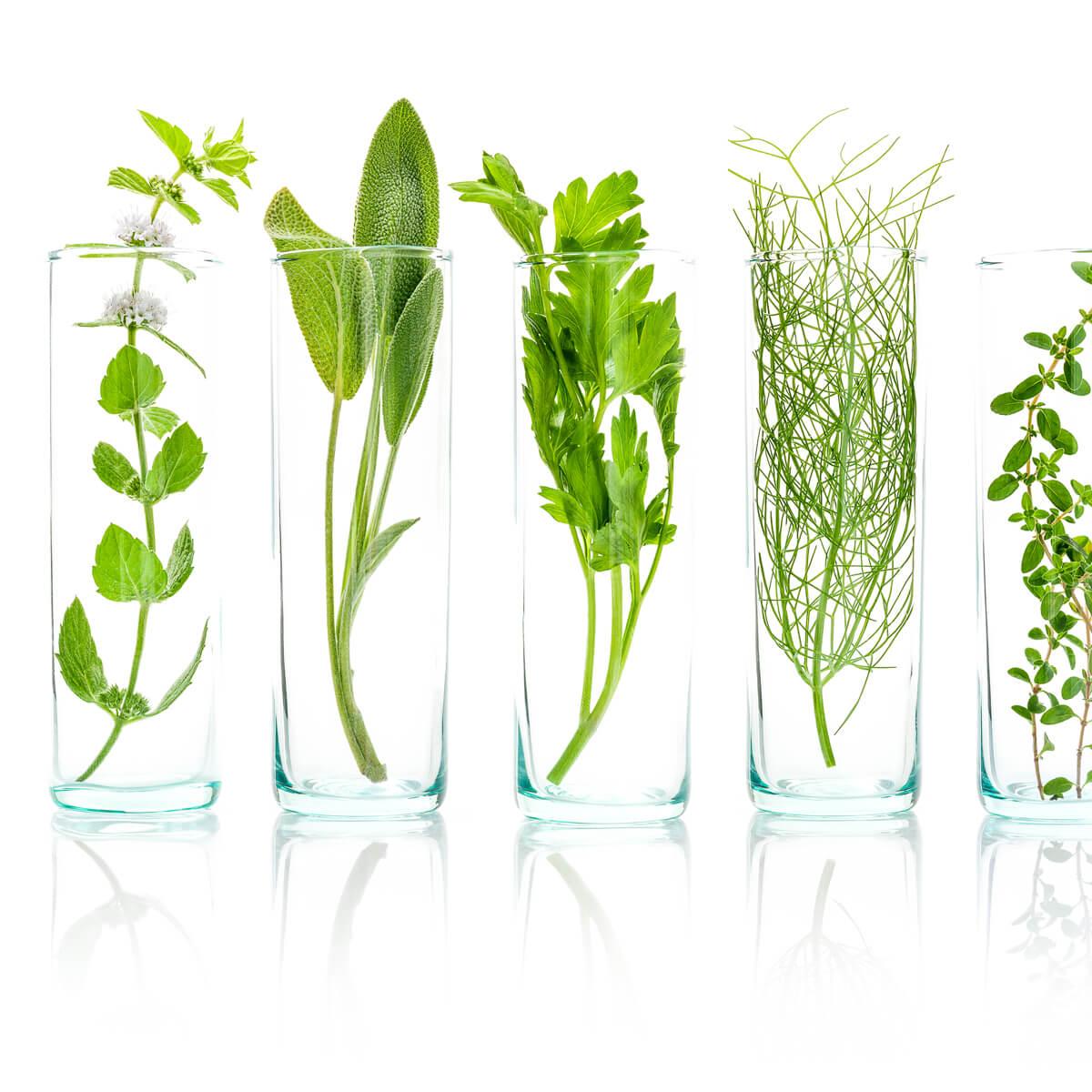 <ul> <li>تصنيف العينات</li> <li>طحن وتكييف المواد البيولوجية</li> <li>المعالجة القبلية للمواد النباتية، التحلل الجزئي وغيرها</li> </ul>