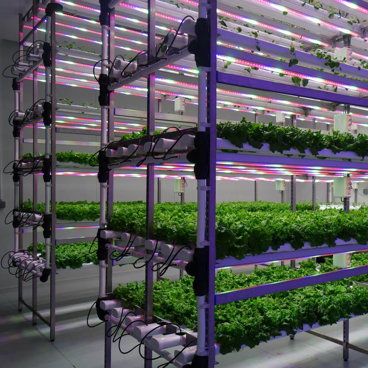 <ul> <li>تطوير تجارب على نطاق صغير على النباتات في ظروف خاضعة للتحكم التام حيث يتم انتاج الظروف التي توجد في أية منطقة من</li> <li>العالم، إلى جانب خلق حالات التوتر الشديد</li> <li>القدرة على محاكاة الطقس المتطرف من -5 درجة إلى 35 درجة</li> <li>من 0% إلى 100% من الرطوبة</li> <li>الفترة الضوئية تحت التحكم</li> </ul>