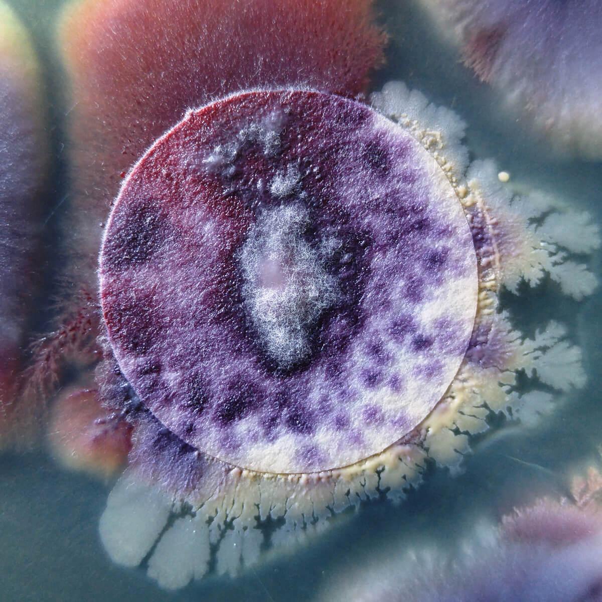 <ul> <li>تربية الآفات المحتجزة وصيانتها</li> <li>تجارب النشاط: مطاردتها والقضاء عليها</li> <li>نماذج متعددة: المصاصة، الحشرات التي تتغذى على أوراق النباتات وتسبب سقوطها، الديدان الأسطوانية، البكتيريا، فطريات</li> <li>التربة، الفطريات الهوائية، وغيرها.</li> </ul>