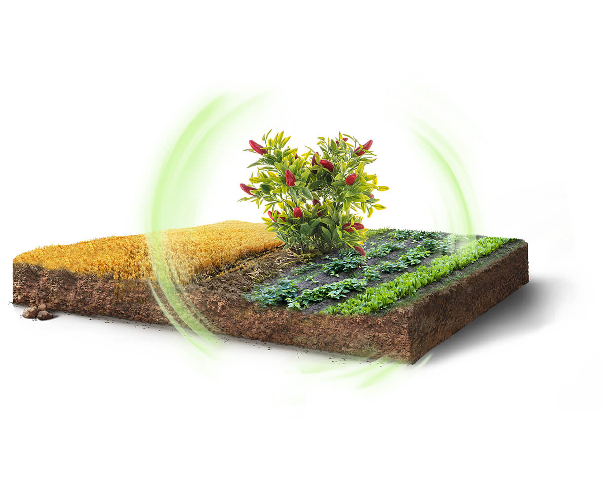Where Nature and Efficacy Walk Hand-in-Hand